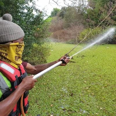 Spraying of Kariba weed starts