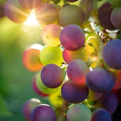 A single bunch of grapes sells for R154 000