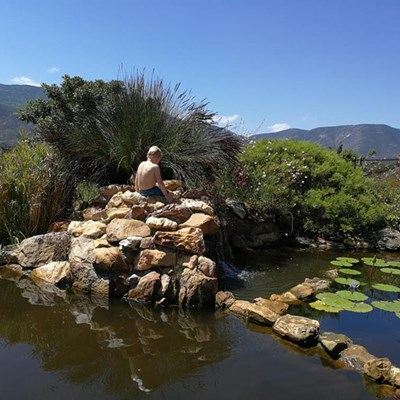 Open Gardens a cure for lockdown blues