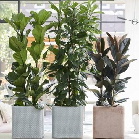 Using indoor plants to decorate