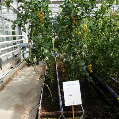 Latest trends in greenhouse technology