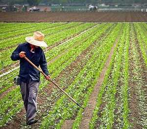 Farming without government support