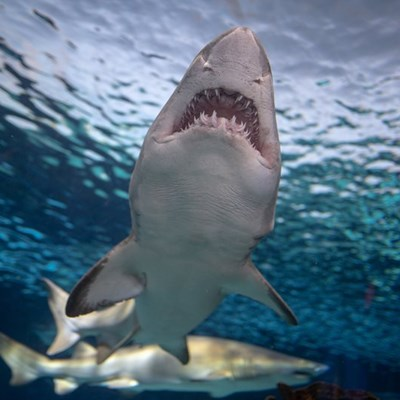 Great white sharks vanish from Cape Town, and no one knows why