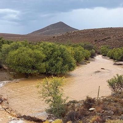 Rain brings relief, but delays Northern Cape grape harvest