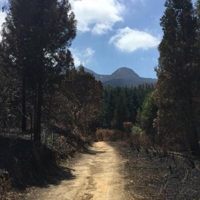 Sunday Garden Route fire update