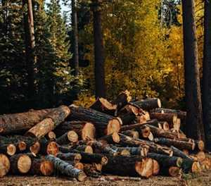 Forestry demand stable, despite toilet paper panic buying