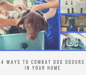4 ways to combat dog odours in your home