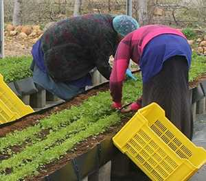 Women in agriculture still face 'outdated' perceptions