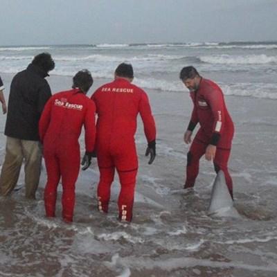 Walvis spoel op strand uit