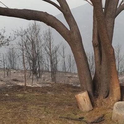 Garden Route fires update: 3 November
