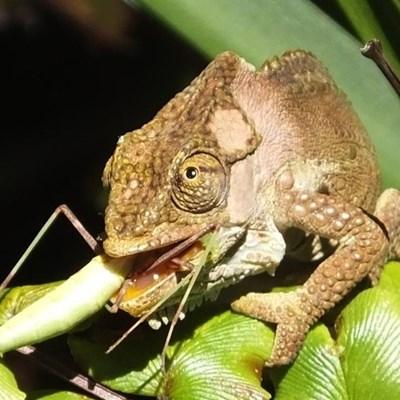 Help record Garden Route's biodiversity
