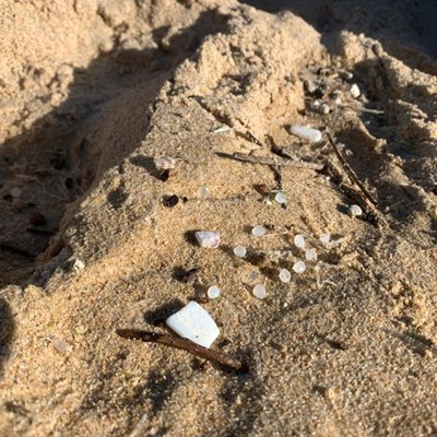 Bitou launches 10-day beach clean-up campaign
