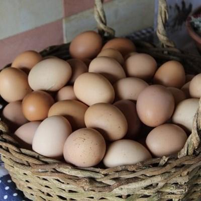 Bela-Bela egg farm tells an excellent story