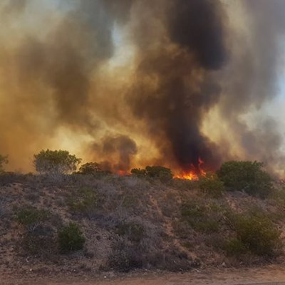 Vegetation fire burning