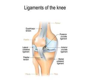 More about knee injuries: Posterior crucial ligament (PCL)