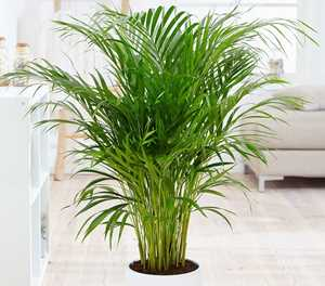 Plants that can purity the air