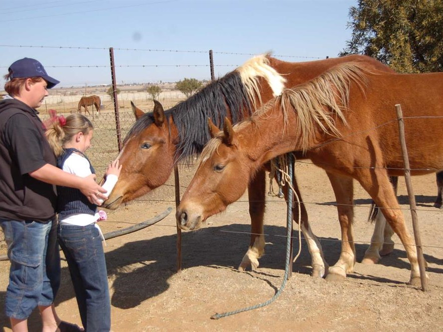 African Horse Sickness control measures critical