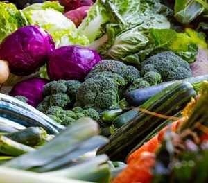 Growing veggies in autumn