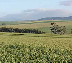 Land invasions cost the WC R269-million