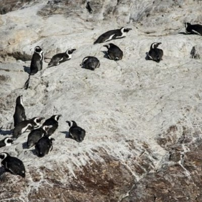 Offshore refuelling deepens fears for South Africa's penguin haven