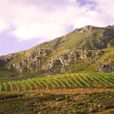 WWF partnership to support SA wines' 'green' credibility