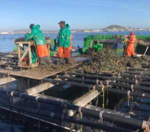 Department allocates 15% of squid catch to small scale fisheries