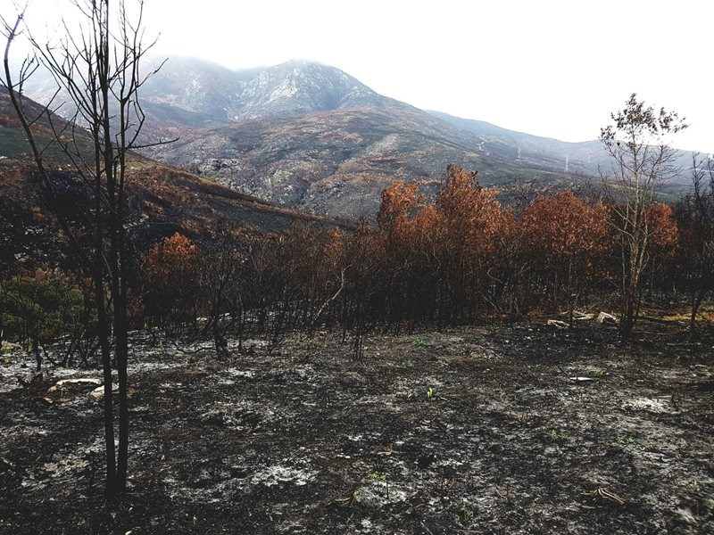 Monday Garden Route fires update