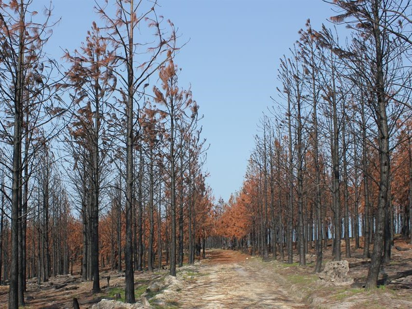 Enviro damage of fires difficult to quantify