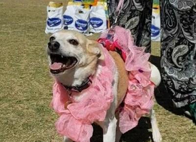 Community Dog Show