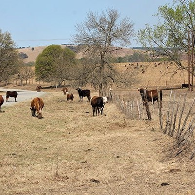 Compliance, enforcement needed to curb brucellosis in KZN