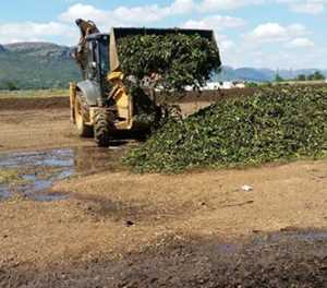 Coca-Cola invests R25m towards Hartbeespoort hyacinth removal