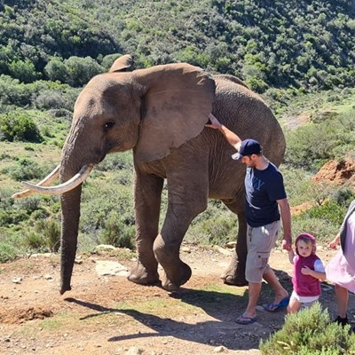 Walk with elephants at Indalu Game Reserve