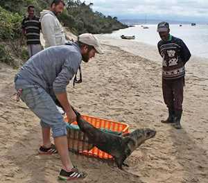 Seal strandings 'a natural occurrence'