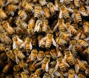 Family pets die in Richards Bay bee attack