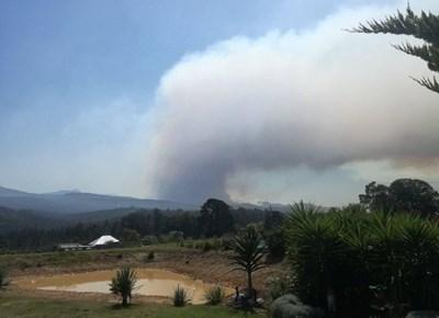 Fire in Karatara claims lives