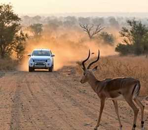 Endangered Wildlife Trust's initiative highlights effects of transport on wildlife