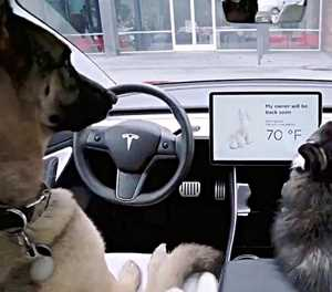 Tesla safeguards two of man's biggest loves