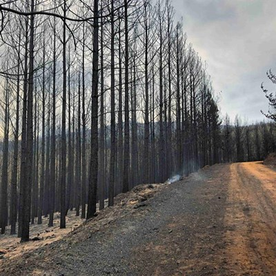 Annual loss of R285-m in sawn timber