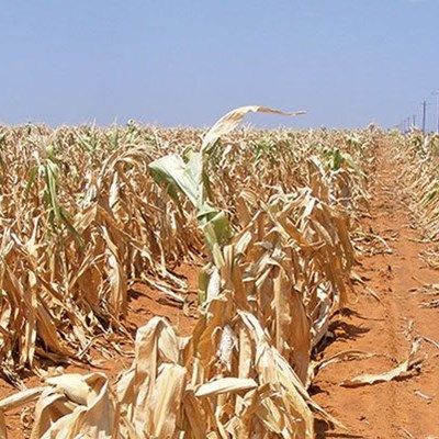 41 million people in Southern Africa to face food insecurity