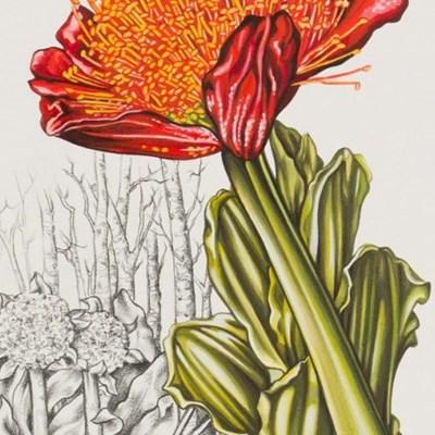More to botanical art than meets the eye