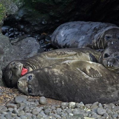 Wildlife documentary series to be filmed on Marion Island