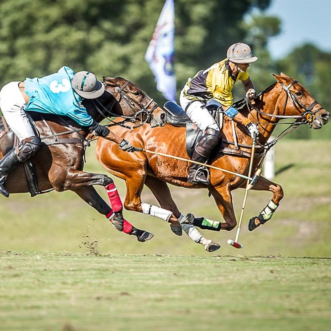 Polo champs bring talent, funds to Plett