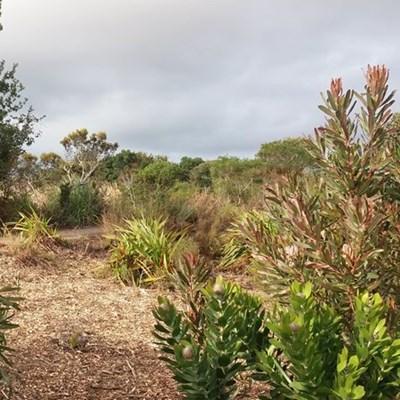 Botanical Garden: All invited to info session