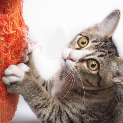 5 hacks every cat owner should know