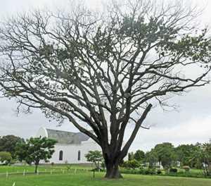 Bome vrek steeds in George