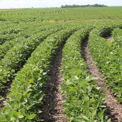 No transport differential for soya beans