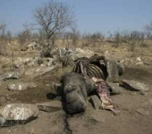 3 Kruger Park rangers arrested for alleged rhino poaching
