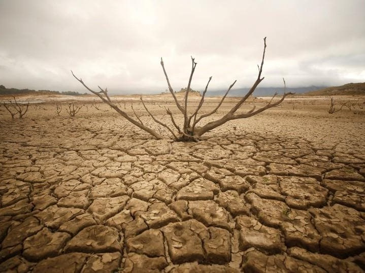 Drought relief 'far too little too late' says Agri EC