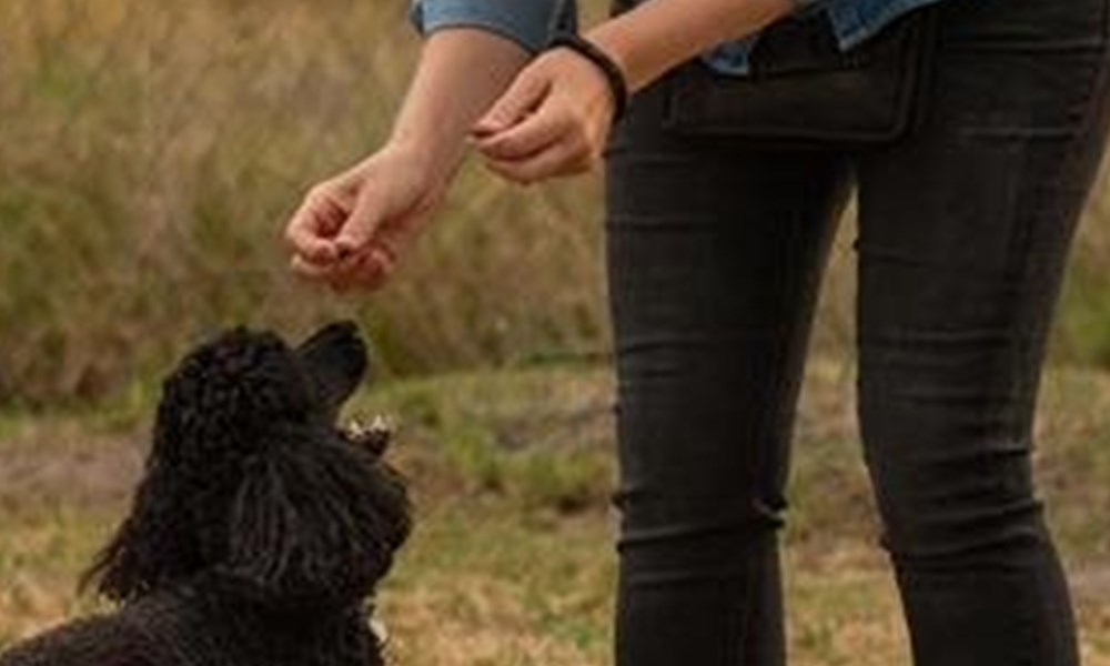 Kaws receives a helping hand