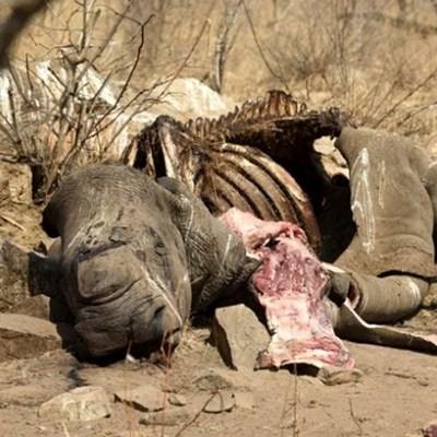 Mozambique sentences 2 rhino poachers for their wildlife crimes in SA